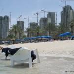 Dubai_construction_c